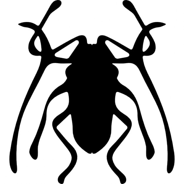 Icon Beetle Pictures