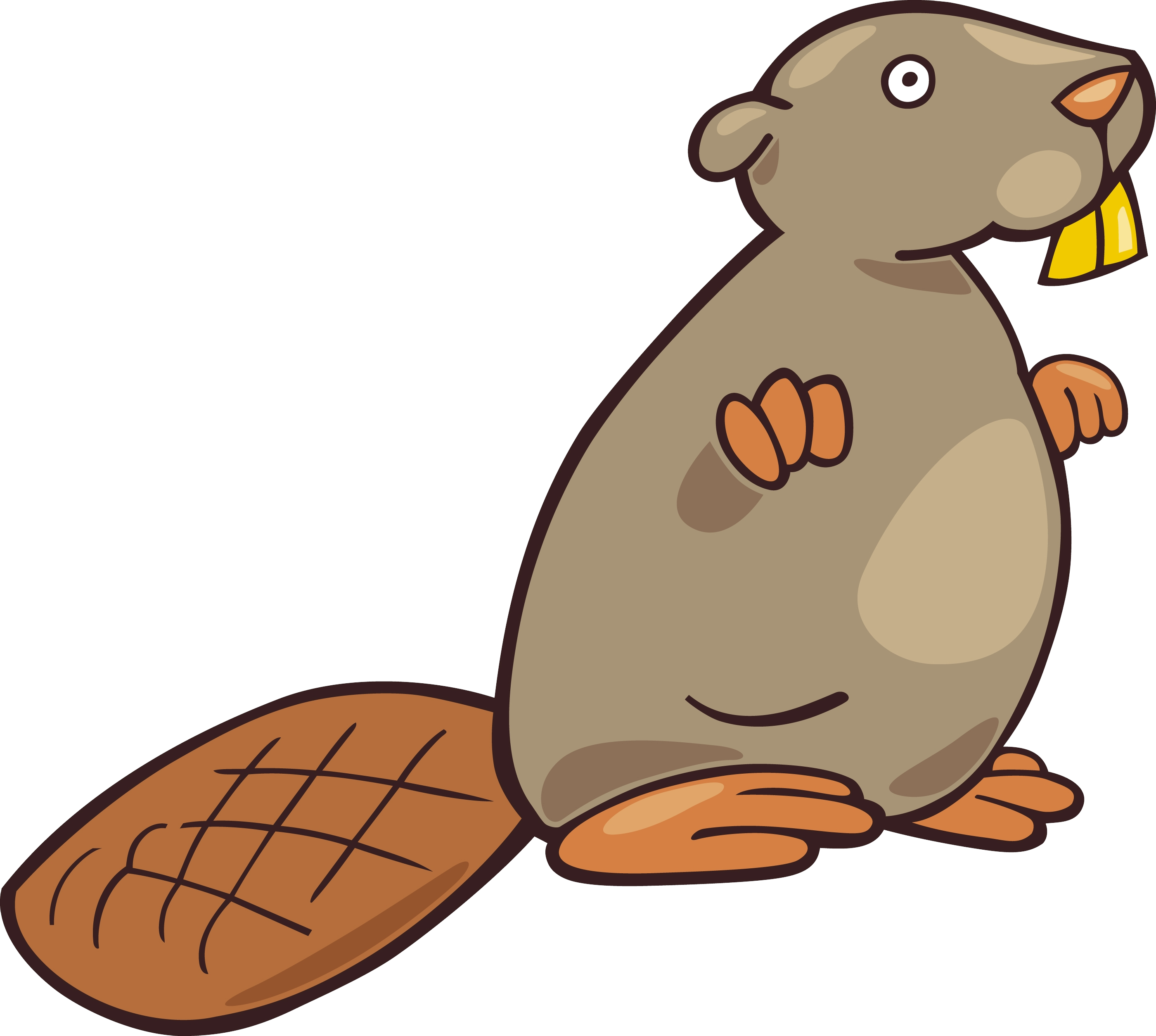 Beige Color Chubby Beaver Photo image #47747