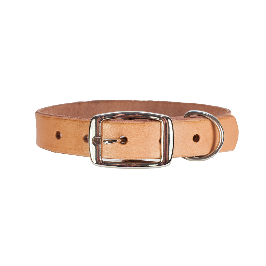 Beige metal and leather dog collar Photo HD