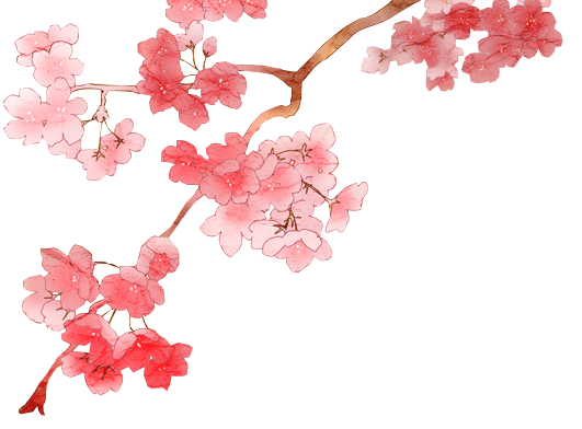 Best Cherry Blossom Png Clipart image #45490