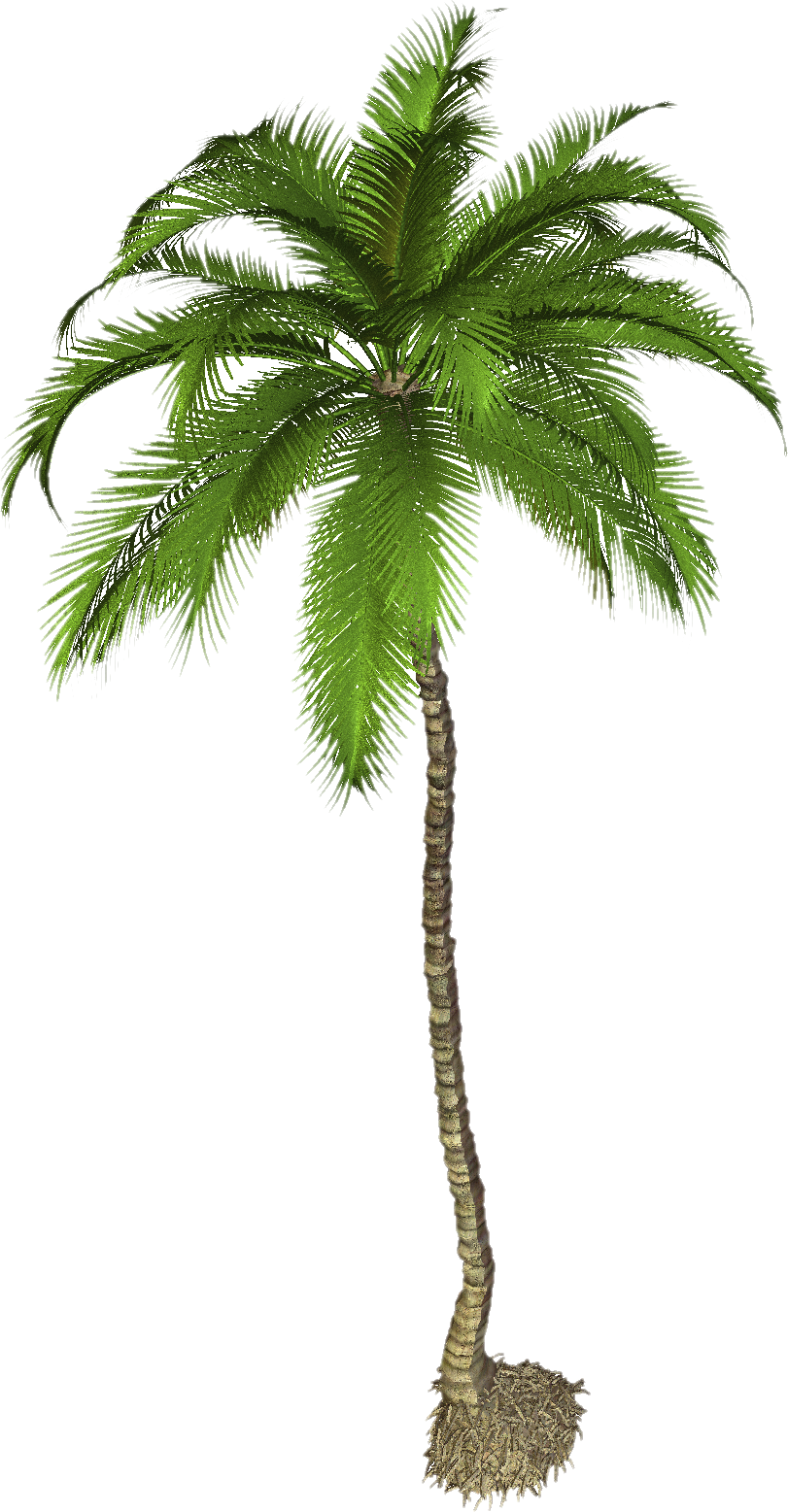 Best Coconut Tree Png Palm Clipart image #46400