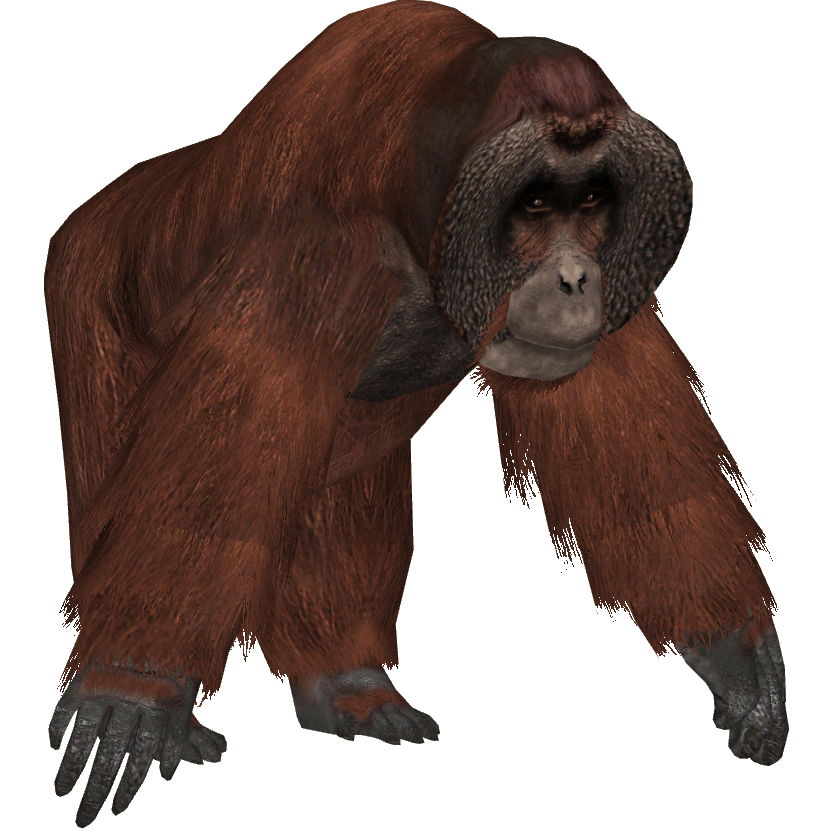 Big and strong Orangutan Picture