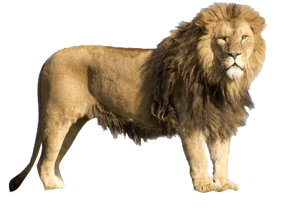 Big lion png