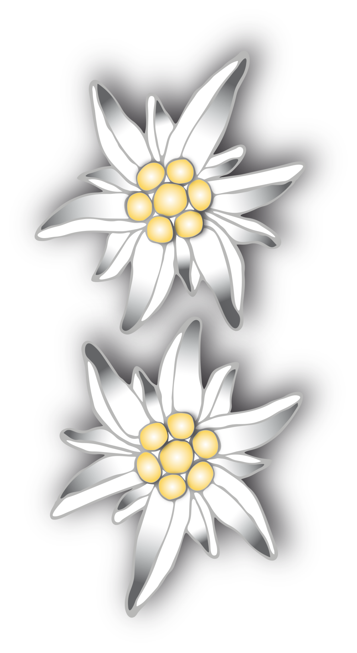 Binary Edelweiss Patterned Flat Picture  image #48582