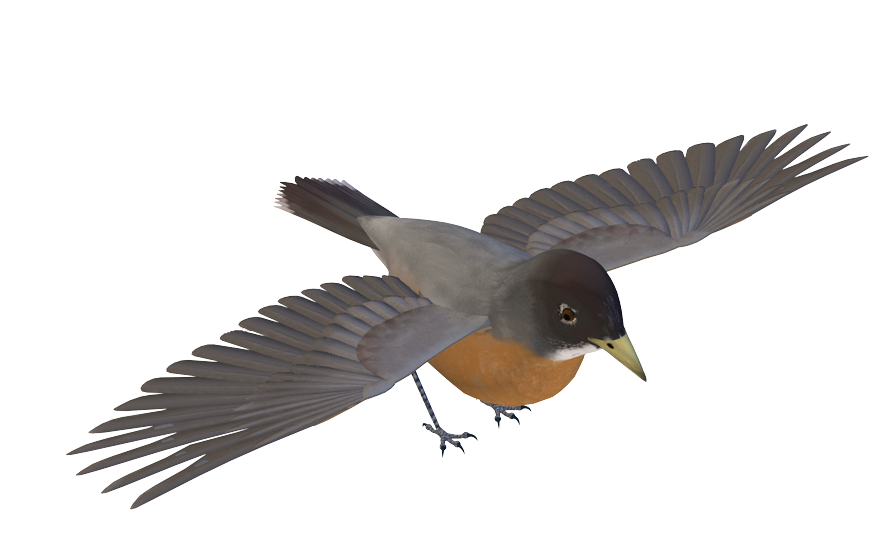 Birds Png Images image #3506