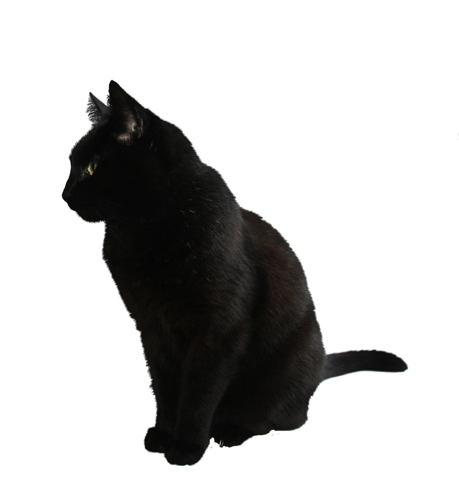 black cat png