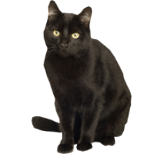 High Resolution Black Cat Png Clipart image #30346