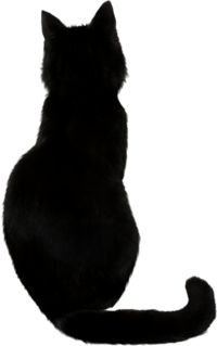 PNG Free Download Black Cat image #30355