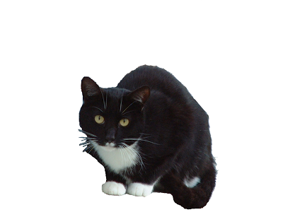 Download And Use Black Cat Png Clipart image #30356