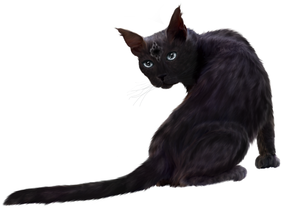 Black Cat Png Clipart Download image #30357