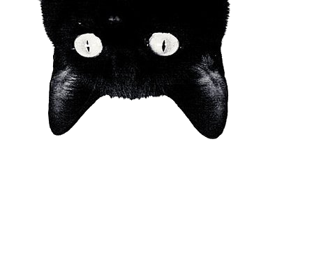 Download Black Cat Free PNG image #30358