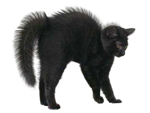 High Resolution Black Cat Png Clipart image #30360