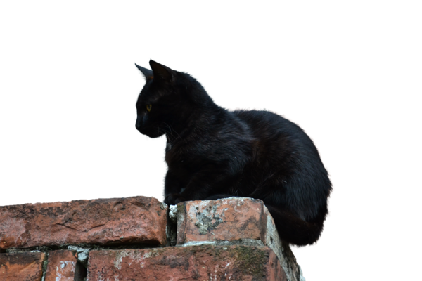 Download Free High-quality Black Cat Png Transparent Images image #30365