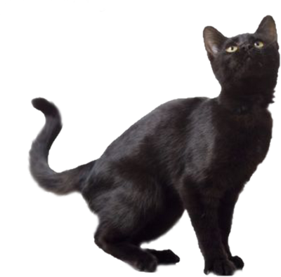 Black Cat Image PNG Transparent