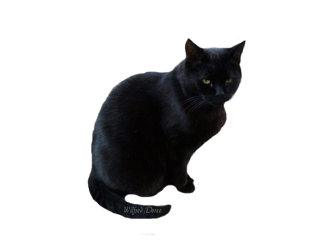Black Cat Transparent PNG image #30374