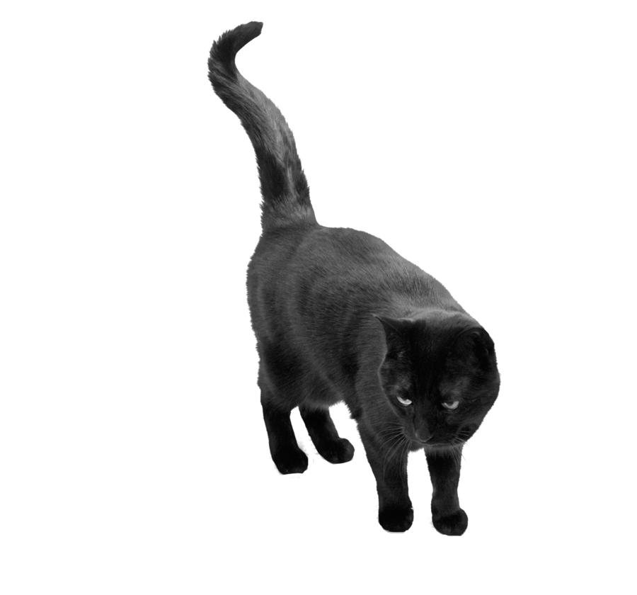 Download Free High-quality Black Cat Png Transparent Images image #30349