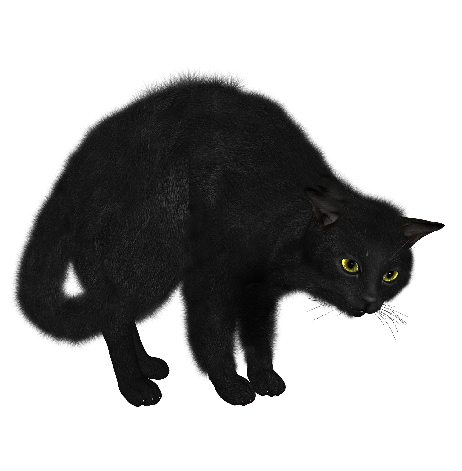 PNG Black Cat Picture