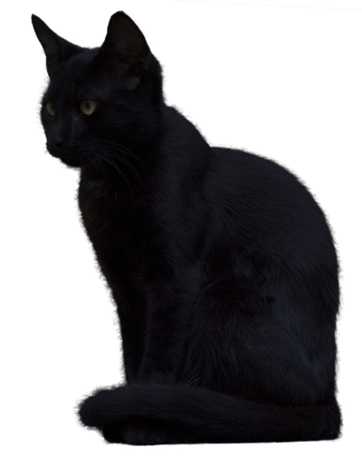 Transparent Black Cat PNG