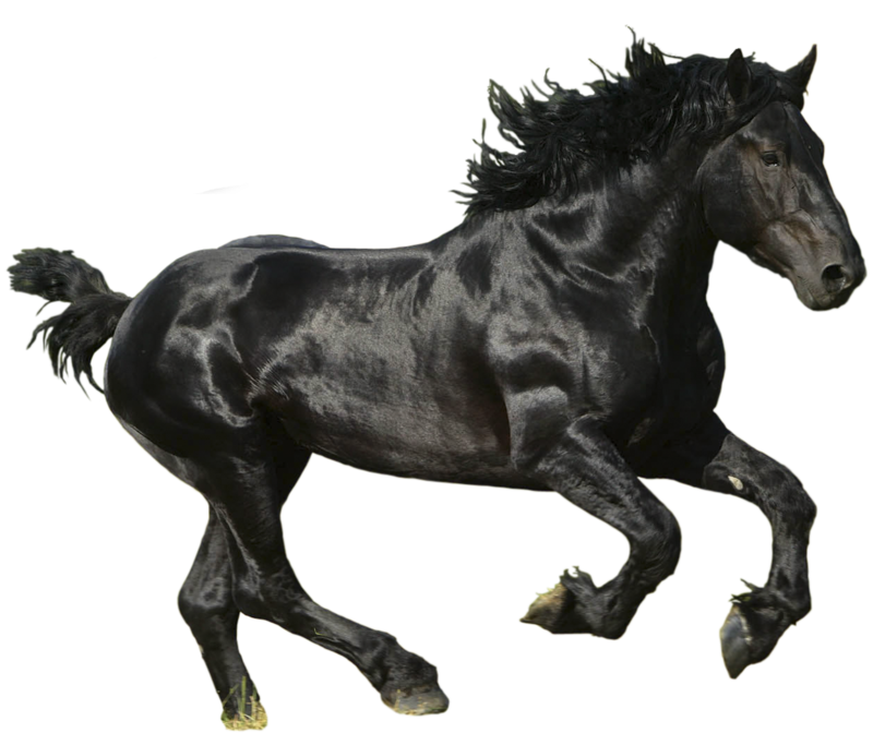 Browse And Download Horse Png Pictures