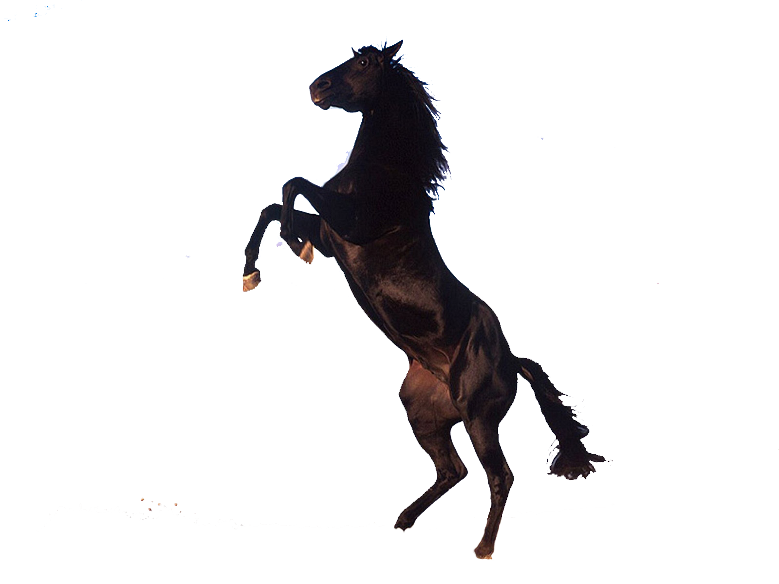 File Horse PNG image #22564