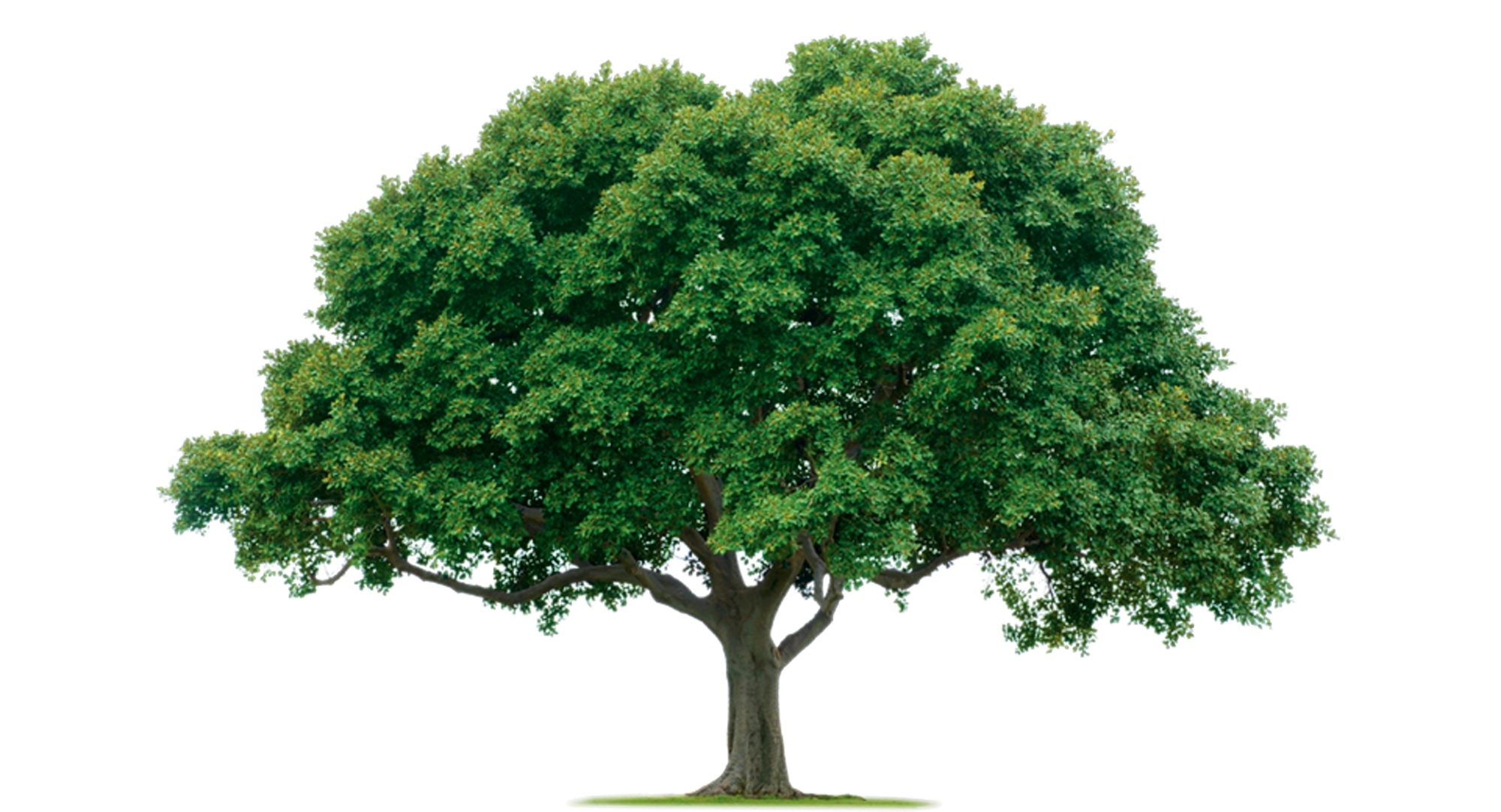 Png Format Images Of Tree image #779
