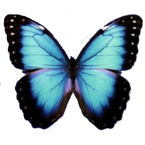 Blue Butterfly Png image #6716
