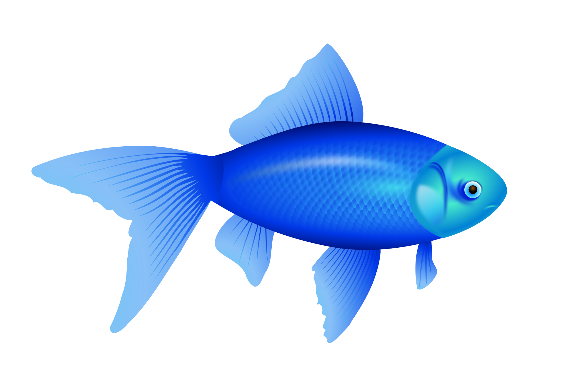 blue fish PNG image