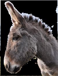 Bor Donkey Head