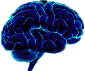 Brain Png image #2549