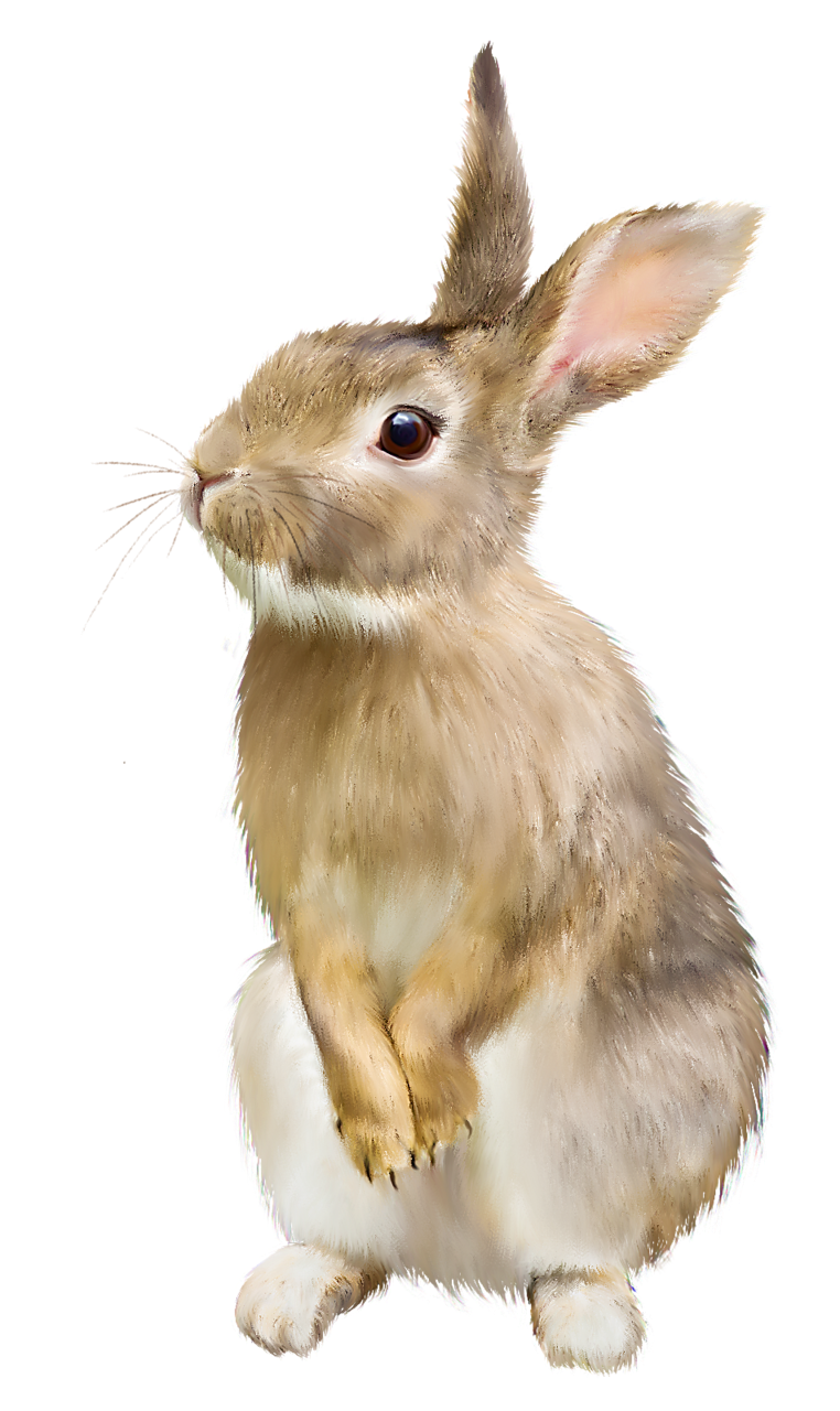 Brown Rabbit Png image #40314