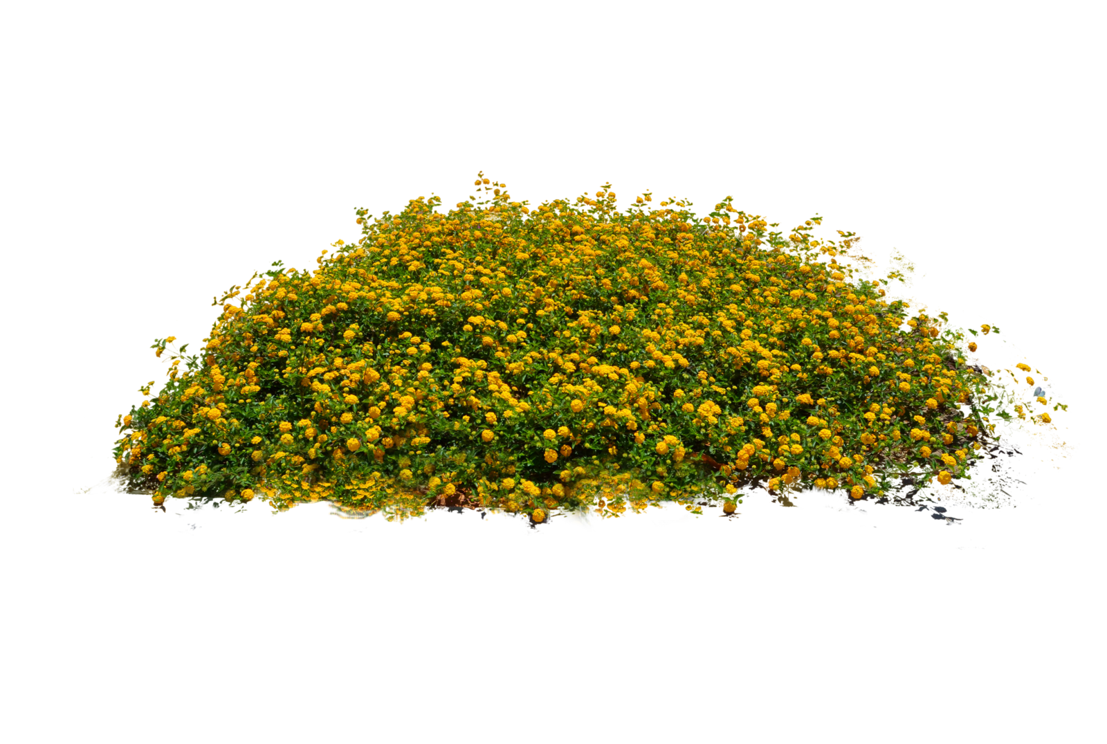 Plants Transparent PNG Pictures