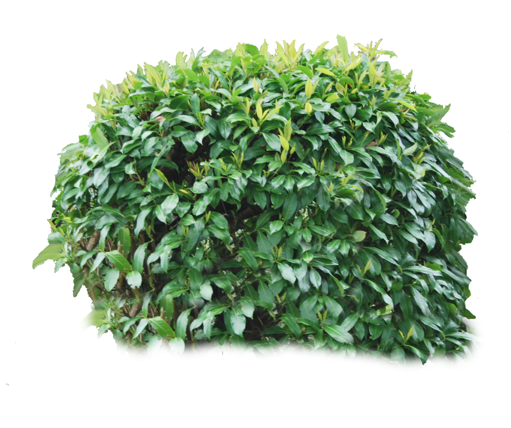 Bushes Transparent PNG Pictures - Free Icons and PNG ...