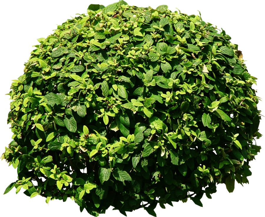 Bush Tree Png Tree png