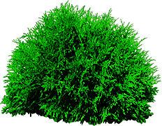 Bushes Tree PNG