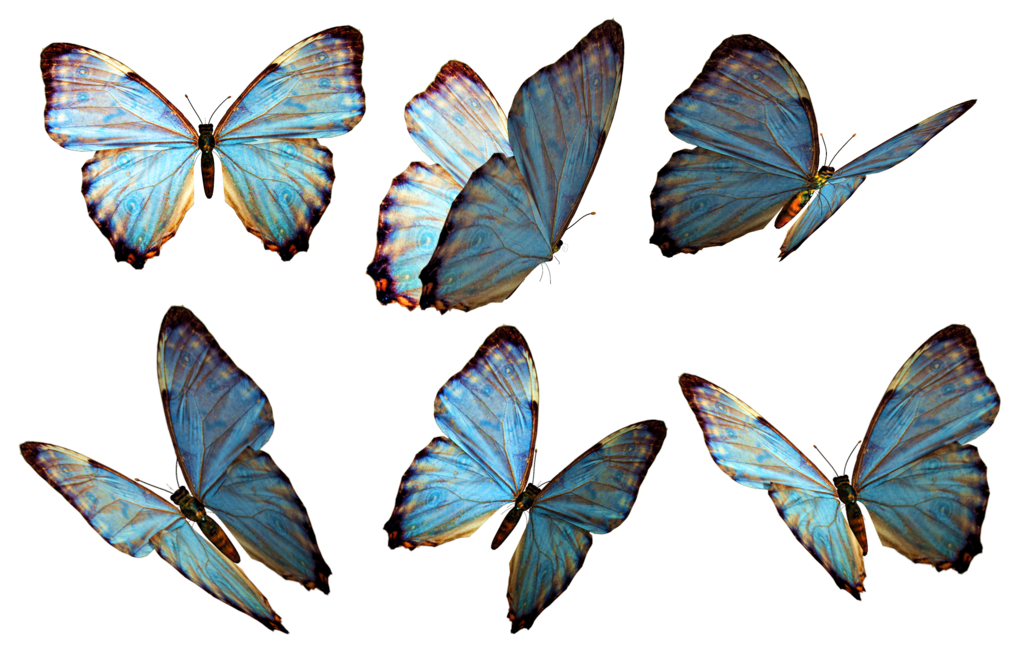 Butterflies Png image #26538