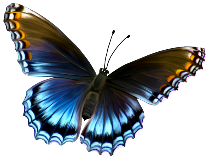 Butterflies Png Available In Different Size