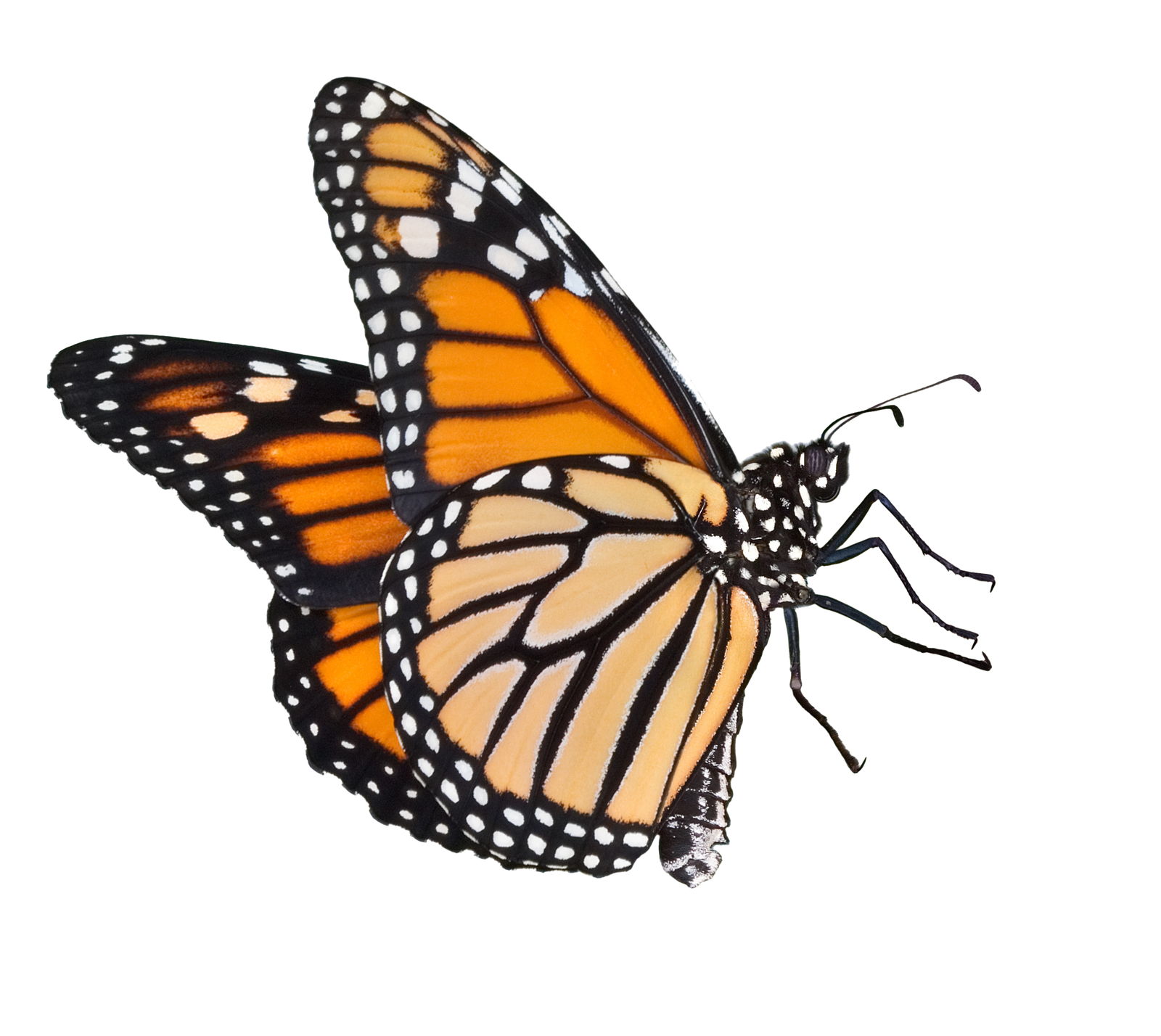 Butterflies Icon Download image #26564