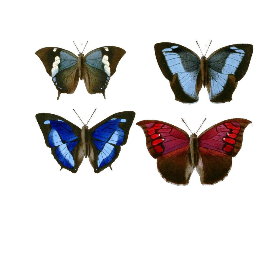 Butterflies Png Available In Different Size image #26565