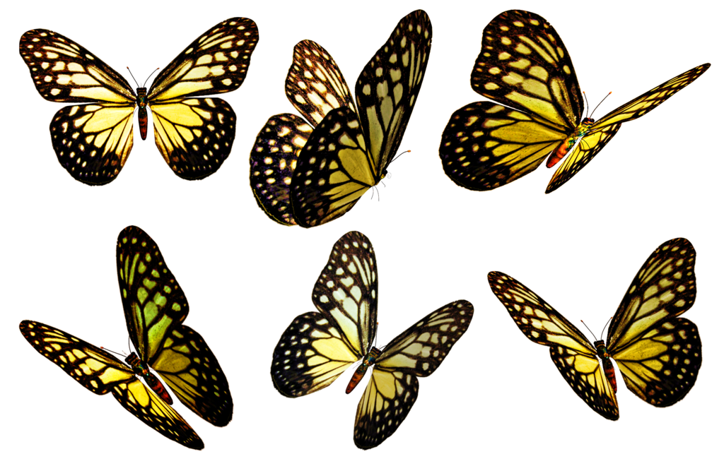 Butterflies Png image #26566