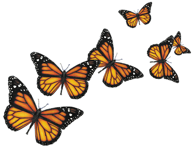 Butterflies Png image #6719