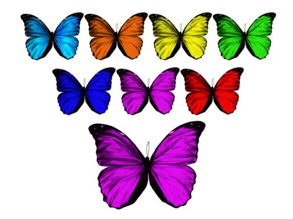 Icon Free Butterfly Png image #17699