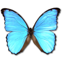 Butterfly Icon Png image #17703