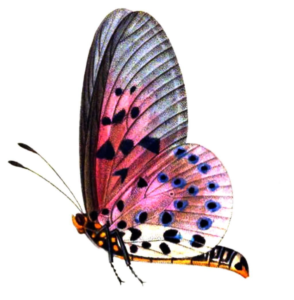 Png Format Images Of Butterfly