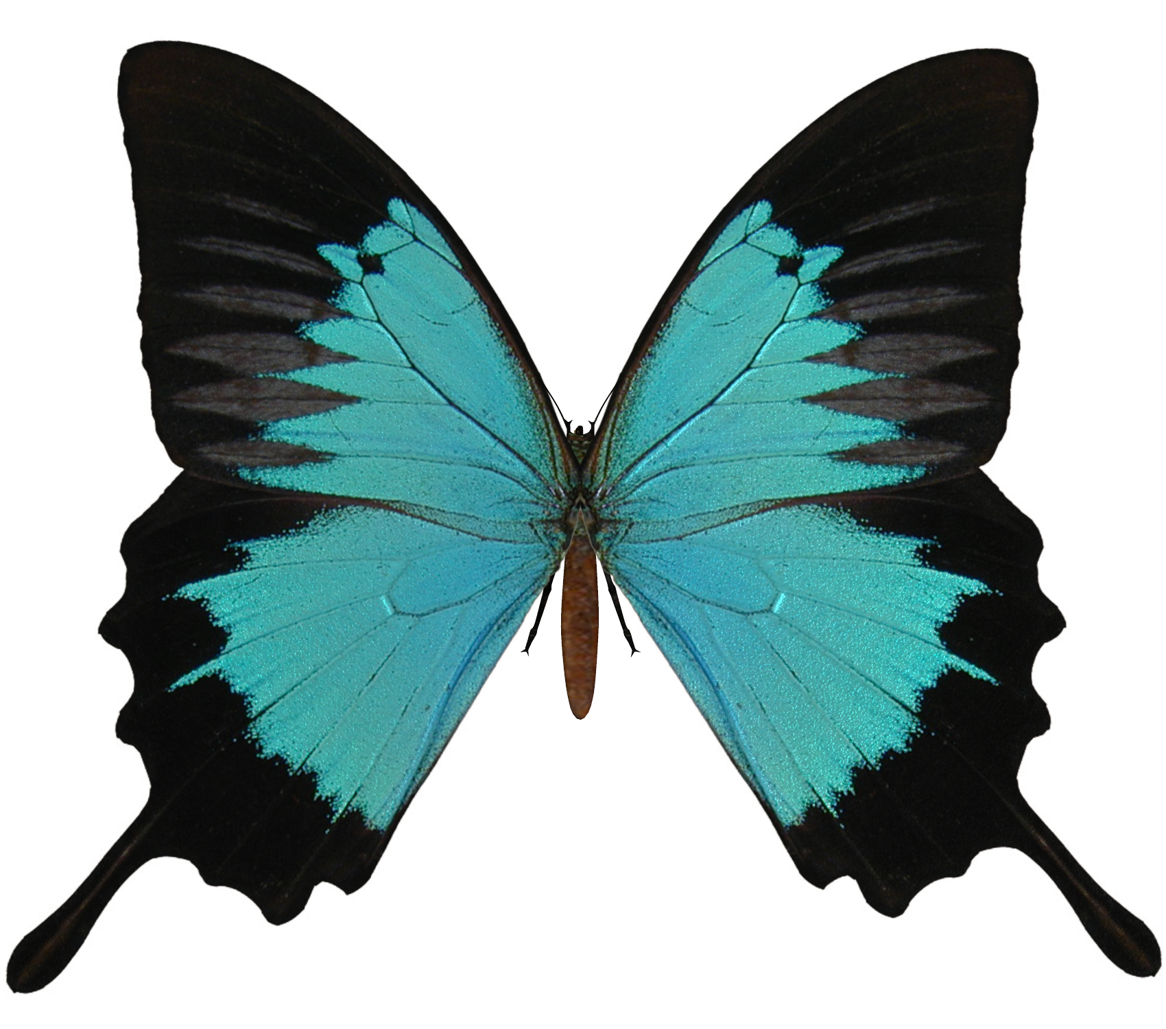 Butterfly Clip Art image #6724