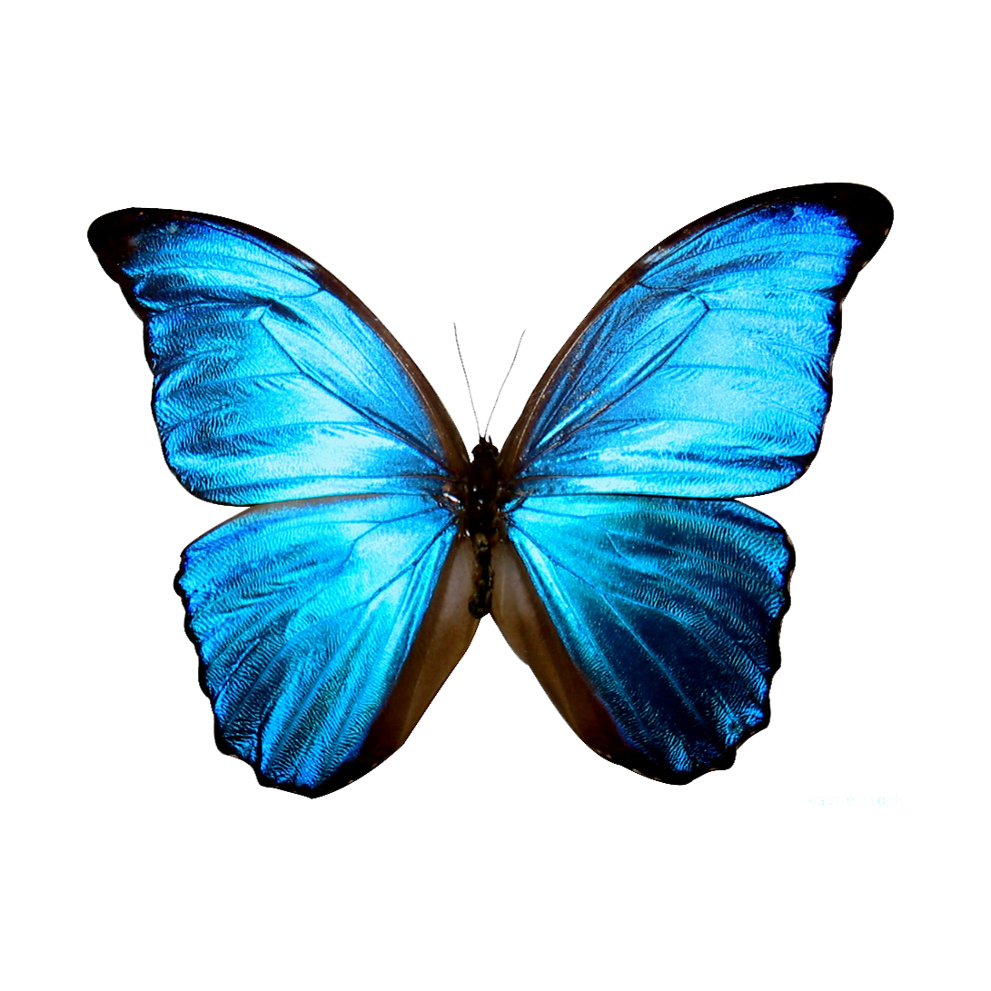 High Resolution Butterfly Png Icon image #6725