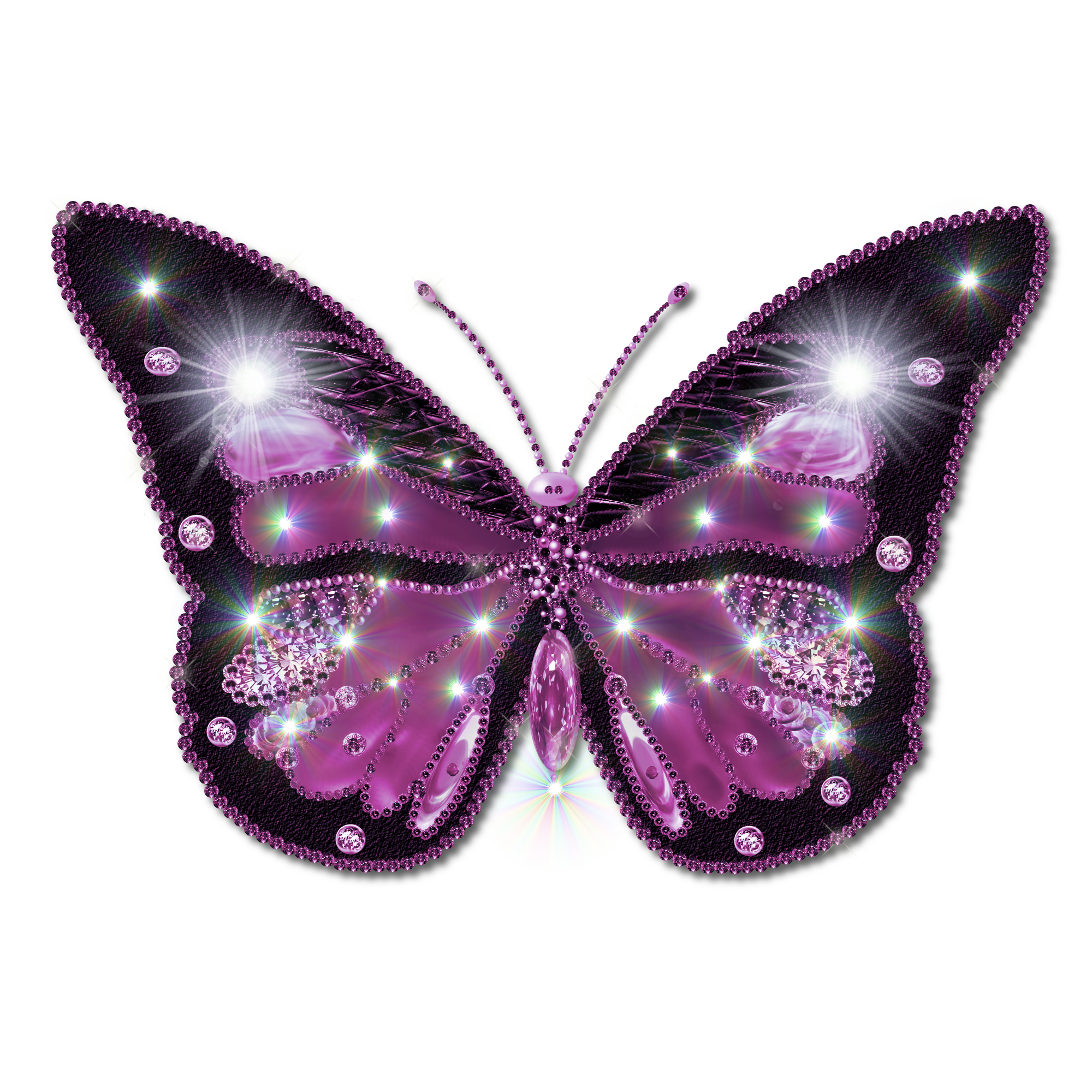 Butterfly Pictures Clipart Free image #6731