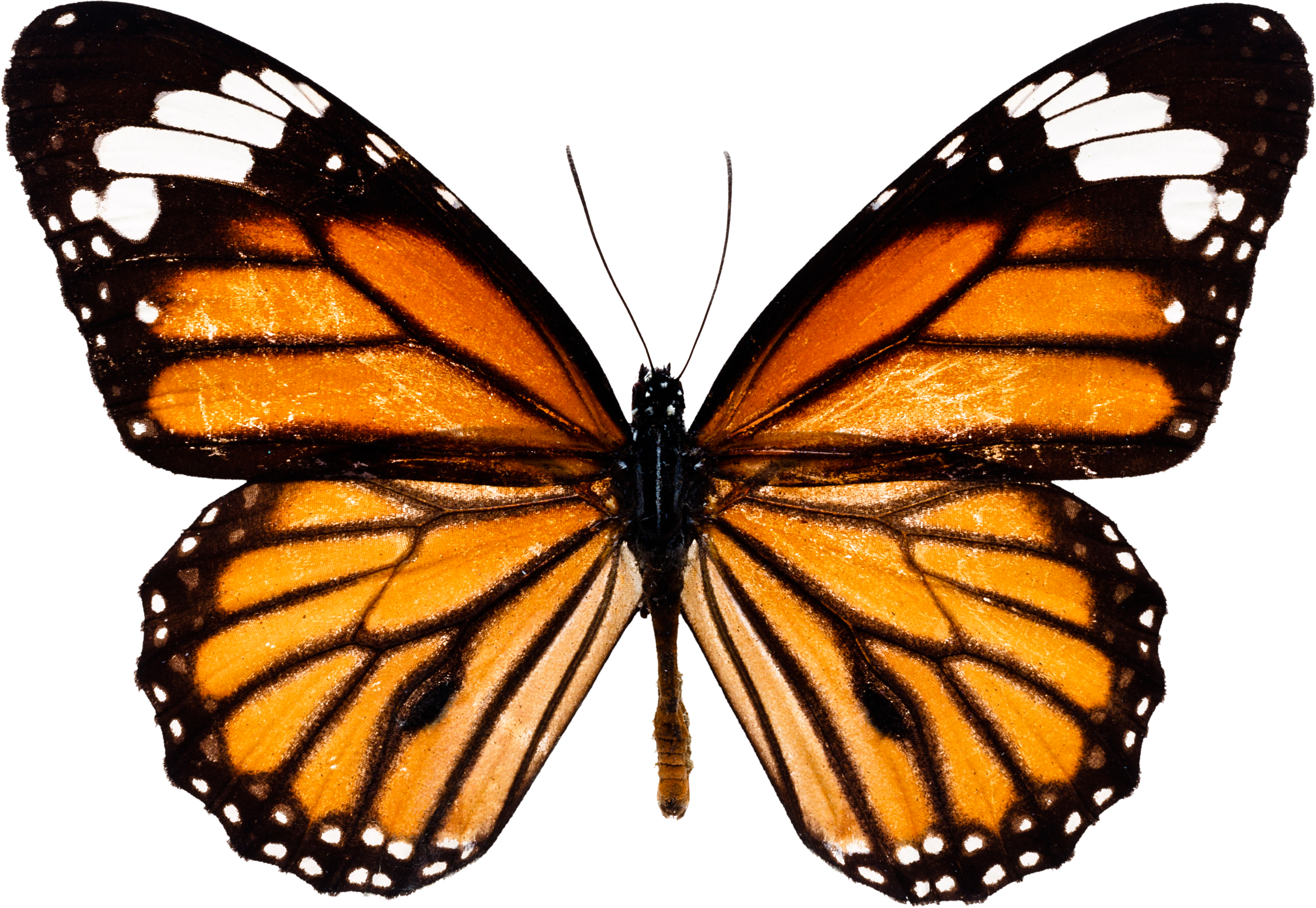 Butterfly Download Images Png Free image #6733