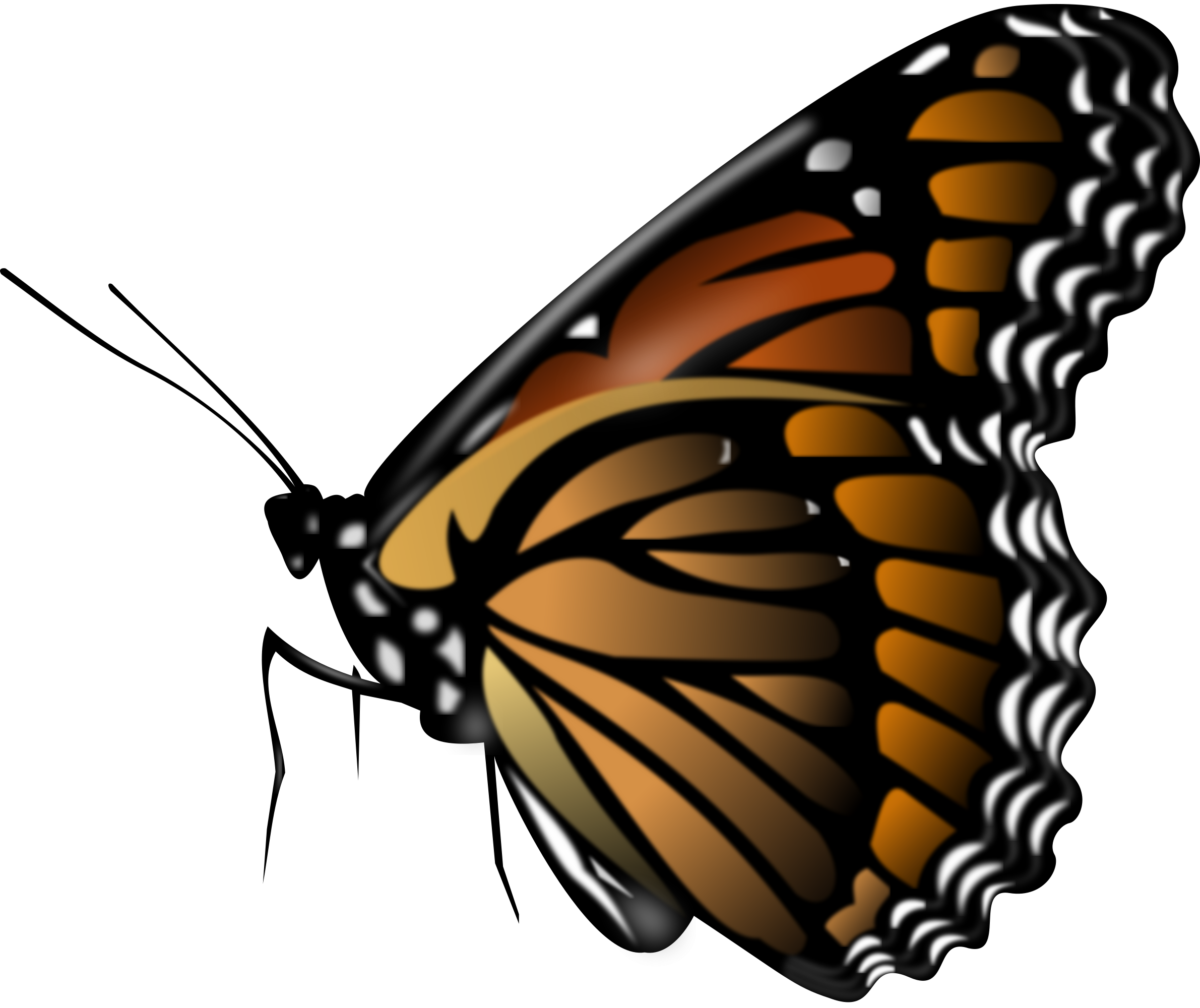 Images Free Download Butterfly image #6734