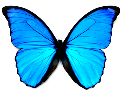 High-quality Butterfly Cliparts For Free! image #6737
