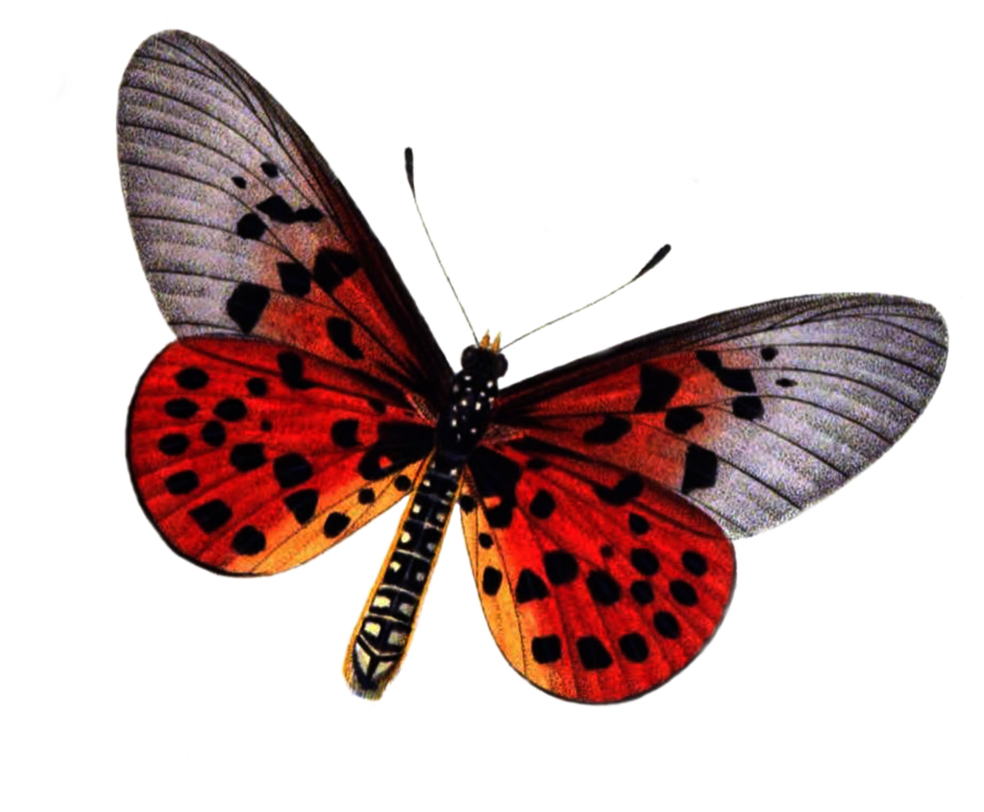 Free Download Of Butterfly Icon Clipart image #6715